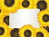 Vector clipart: Sunflowers card
