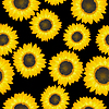 Vector clipart: Sunflowers pattern