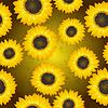 Vector clipart: Sunflowers seamless