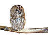 ID 3010630 | Isolated owl | High resolution stock photo | CLIPARTO