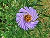 Abstract vortex flower | Stock Foto