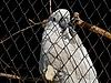 Photo 300 DPI: Parrot cockatoo