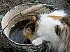 饮酒猫   免版税照片