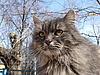 Gray cat | Stock Foto