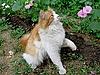 打猫   免版税照片