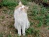 Photo 300 DPI: Thinking cat