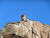 山羊在岩石   免版税照片