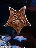 Starfish | Stock Foto