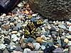 ID 3011032 | Gelber und schwarzer Frosch | Foto mit hoher Auflösung | CLIPARTO