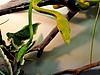 Photo 300 DPI: Thin snakes