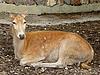 Photo 300 DPI: Doe deer