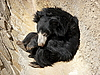 Sleeping bear | Stock Foto