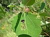 吃甲虫 | 免版税照片