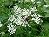 Photo 300 DPI: Mosquito