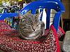椅子上的猫   免版税照片