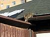 ID 3011928 | Katze auf Dach | Foto mit hoher Auflösung | CLIPARTO