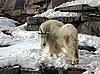 Snow goat | Stock Foto