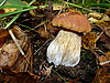 Autumn white mushroom | Stock Foto