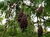 Cones | Stock Foto