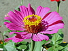 Pink flower | Stock Foto