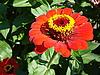 Red flower | Stock Foto
