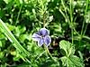 Blue flower | Stock Foto