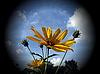 Yellow flower | Stock Foto