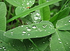 Water drops on leaves | Stock Foto