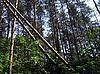 Photo 300 DPI: Fallen trees
