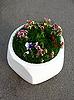 Flowerbed | Stock Foto