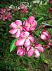 Pink flowers | Stock Foto