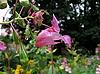 Unusual flower | Stock Foto
