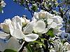 White petals | Stock Foto