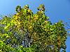 Hojas amarillas | Foto de stock