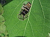 Cute beetle sits in the hole of the leaf | Stock Foto