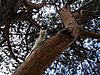猫上树   免版税照片