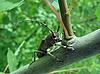 귀여운 딱정벌레 | Stock Foto