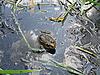 Photo 300 DPI: Frog