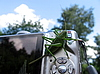 Фото 300 DPI: Зеленый кузнечик на камеру