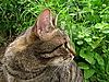 灰色的猫   免版税照片