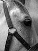 Horse | Stock Foto