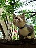 Curious kitten | Stock Foto