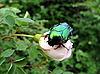 Large beetle | Stock Foto