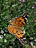 Large butterfly | Stock Foto