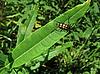 Motley bug on leaf | Stock Foto