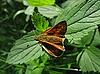 Mały czerwony motyl na liściu | Stock Foto