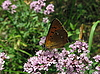 ID 3012597 | 작은 나비 | 높은 해상도 사진 | CLIPARTO