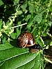 Snail on leaf | Stock Foto