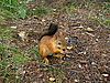 Squirrel on the ground | Stock Foto