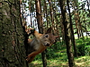 Squirrel on the tree | Stock Foto